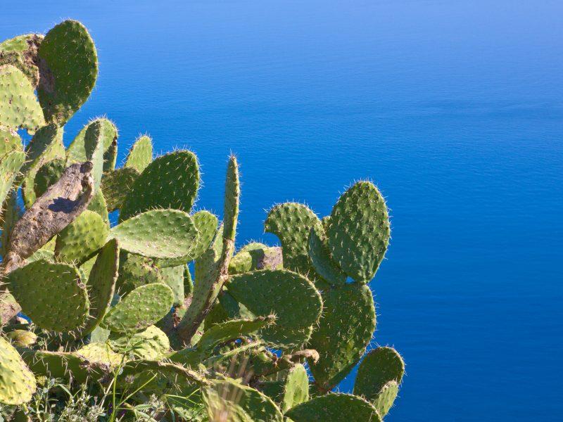 Sicilië cactus