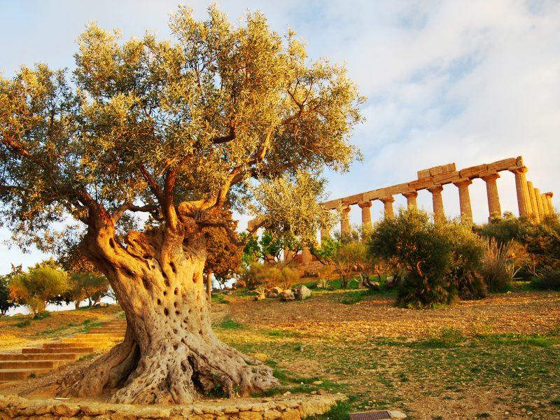 Agrigento Vallei der Tempels